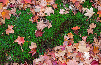 Photograph - Forest Carpet by Keith Armstrong