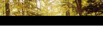 Catskill Photograph - Forest, Catskill Mountains, New York by Panoramic Images