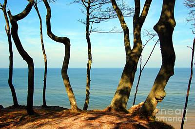Bronze Photograph - Forest Coast by Michal Bednarek