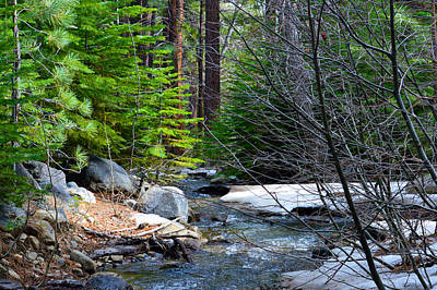 Photograph - Forest Creek 3 by Brent Dolliver