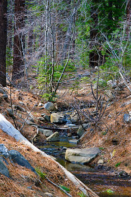 Photograph - Forest Creek 7 by Brent Dolliver