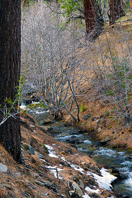 Photograph - Forest Creek 8 by Brent Dolliver