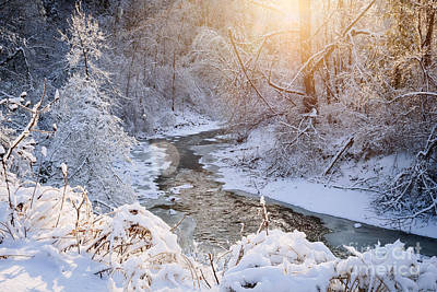 Forest Creek After Winter Storm Art Print by Elena Elisseeva