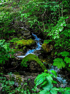 Photograph - Forest Creek by Robert Bales