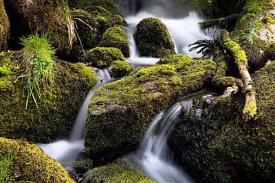 Forest Creek Streaming Between Moss Print by Dirk Ercken