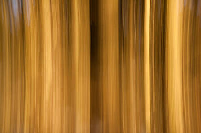 Photograph - Abstract Forest by Davorin Mance