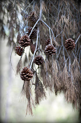 Photograph - forest decoration - A pine tree give us a natural autumn decoration  by Pedro Cardona Llambias