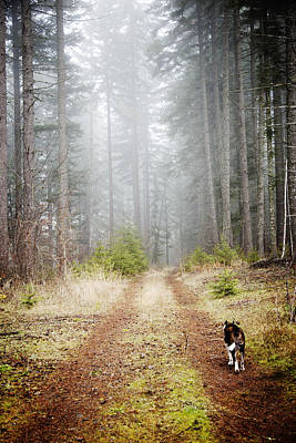 Photograph - Forest Dog by Crystal Cox
