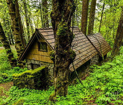 Burl Photograph - Forest Dwelling - Oregon Rainforest by Gary Whitton