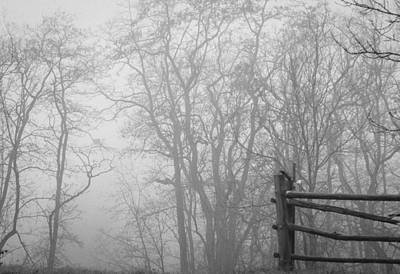 Photograph - Foggy Forest Entryway by Miguel Winterpacht