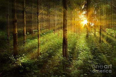 Forest Fairytale Art Print by Bernadett Pusztai