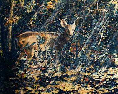 Forest Fawn Art Print by Dan Terry