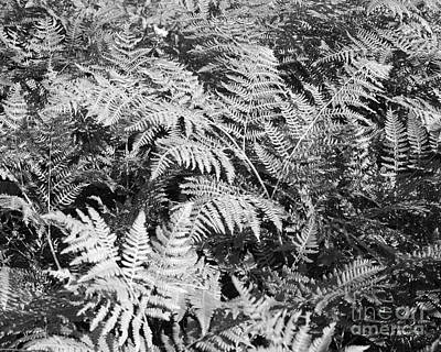 Photograph - Forest Fern by Connie Fox