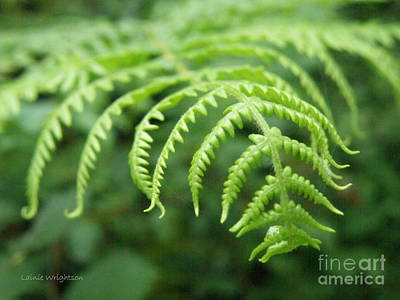 Forest Fern Art Print by Lainie Wrightson