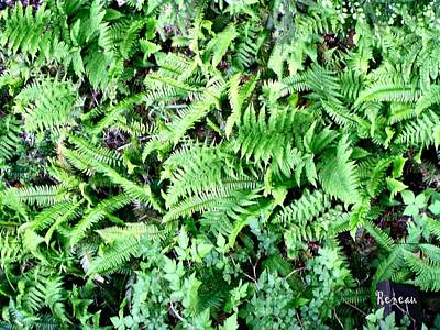 Photograph - Forest Ferns by Sadie Reneau