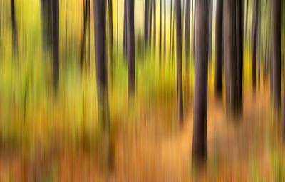Intentional Camera Movement Photograph - Forest Fire by Bill Wakeley