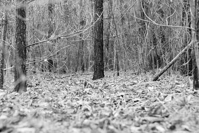Photograph - Forest Floor Black And White by Mez