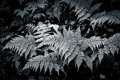 Photograph - Forest Floor by Dave Hall