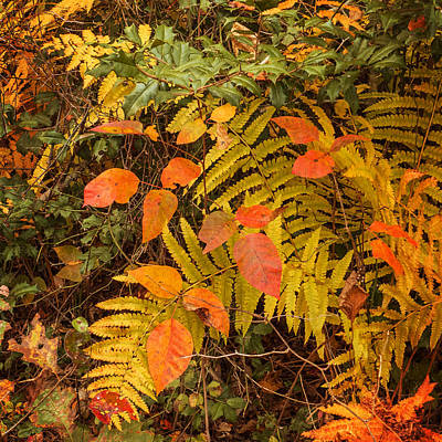 Photograph - Forest Floor Fall 2013 by Frank Winters