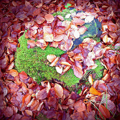 Forest Photograph - Forest Floor In Fall Brown Foliage Green Moss  by Matthias Hauser