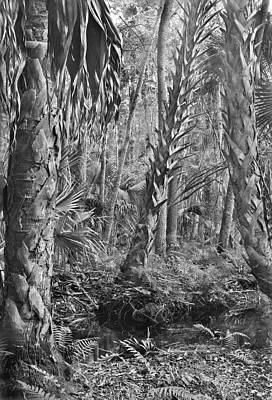 Photograph - Forest Floor. Little Big Econ State Forest Seminole County.  by Chris  Kusik