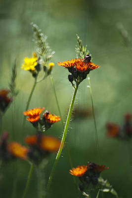 Photograph - Forest Flowers by Christina Rollo