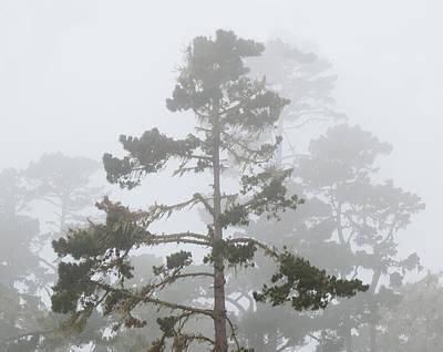 Photograph - Forest Fog by Derek Dean