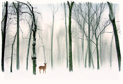 Photograph - Forest Friend by Jessica Jenney