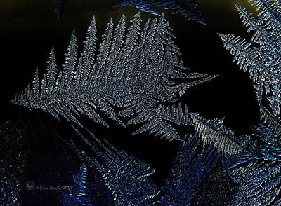 Photograph - Forest Frost by Fred Denner