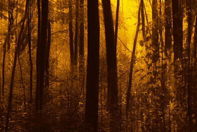 Photograph - Forest Glow by Jim Vance
