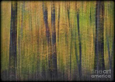 Forest Glow Art Print by Susan Candelario