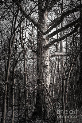 Photograph - Forest Guardian by Michael Arend