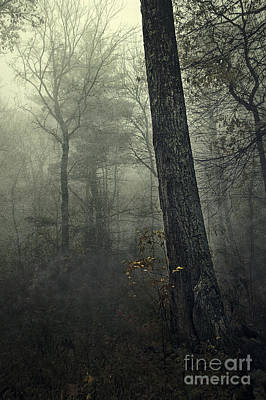 Bare Trees Photograph - Forest by HD Connelly