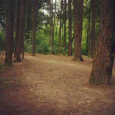 Woodland Photograph - #forest #hiking #woodland #woods #trees by Karen Clarke
