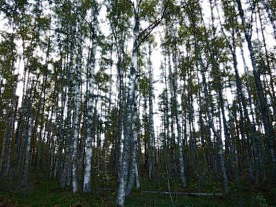 Photograph - Forest II by Kukka Lehto