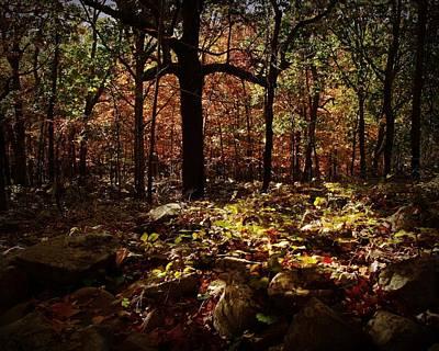 Autumn Scene Digital Art - Forest Illuminated by Linda Unger