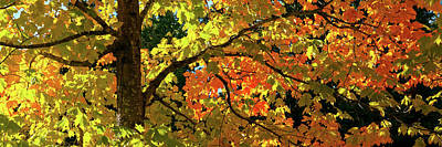 Forest In Autumn Art Print by Babak Tafreshi