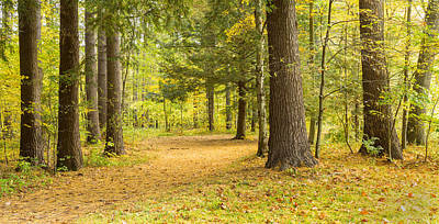 Fallen Leaf Photograph - Forest In Autumn, New York State, Usa by Panoramic Images