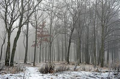 Photograph - Forest In Fog by Randi Grace Nilsberg
