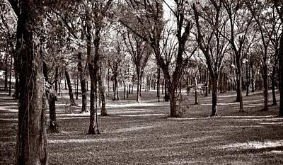 Photograph - Forest In Sepia by Ricardo J Ruiz de Porras