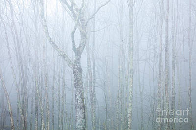Photograph - Forest In The Mist by Susan Cole Kelly