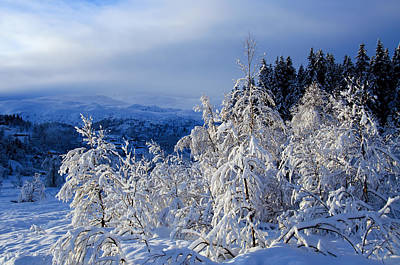 Norway Photograph - Forest In Winter Wonderland by Gry Thunes