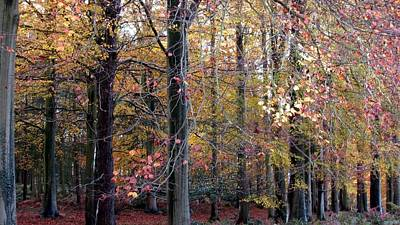 Photograph - Forest by Joyce Woodhouse