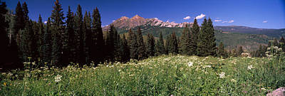 Forest, Kebler Pass, Crested Butte Print by Panoramic Images