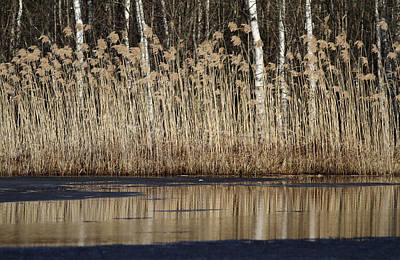 Photograph - Forest Lake In Early Spring by Alex Sukonkin