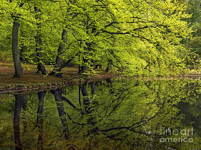 Photograph - Forest Lake by Inge Riis McDonald