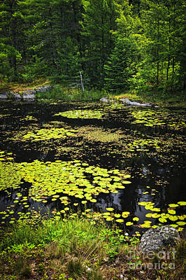 Forest Lake With Lily Pads Art Print
