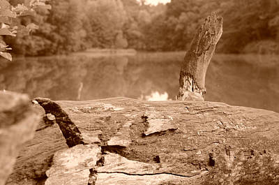 Forest Lakes Art Print by Miguel Winterpacht