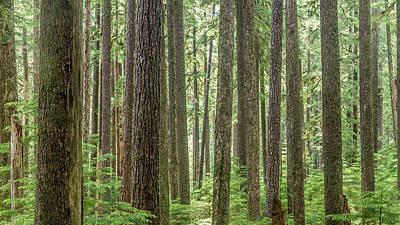 Photograph - Forest Landscape by Pierre Leclerc Photography