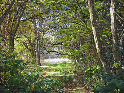 Photograph - Forest Lane by Jacqueline  DiAnne Wasson